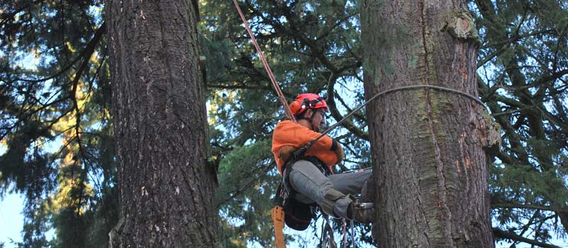 Tree Pruning Lincoln City