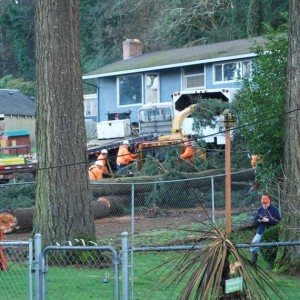 Tree Removal by Vernon Imel Tree Servie