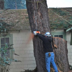 Tree Removal Pacific City