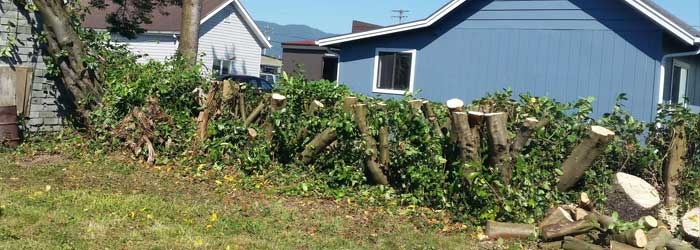 Tree Service Lincoln City OR