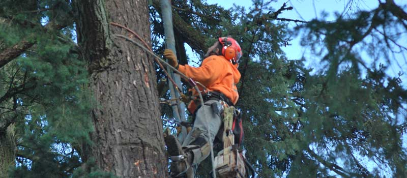 Tree Pruning Lincoln City by Vernon Imel Tree Service