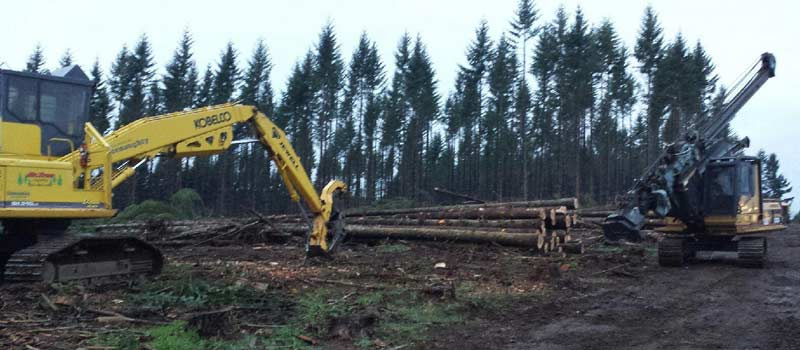 Wooded Lot Management Lincoln City