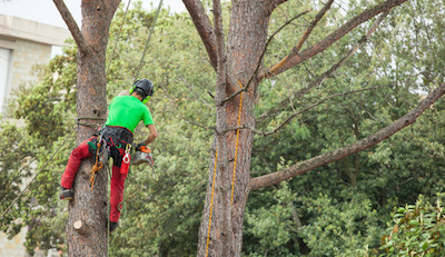 5 Reasons to Trim Your Trees