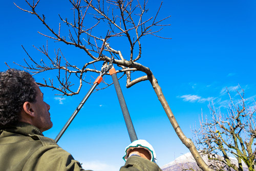 How to Prune a Tree During the Cold Months