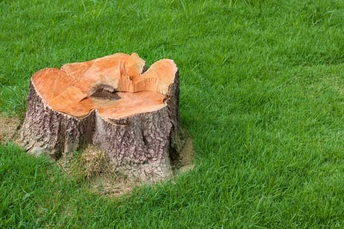 The Best Solutions for Removing a Tree Stump