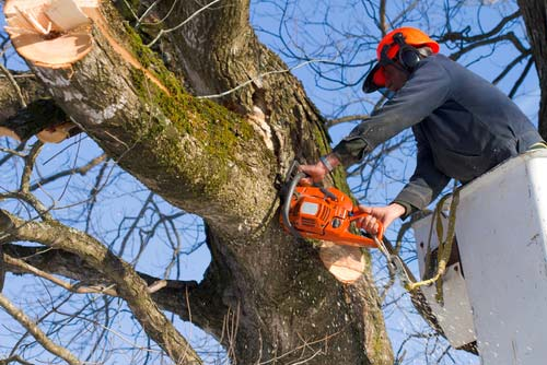 Top Tips for Hiring an Arborist