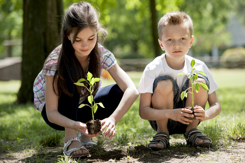 A Step-by-Step Guide to Tree Planting