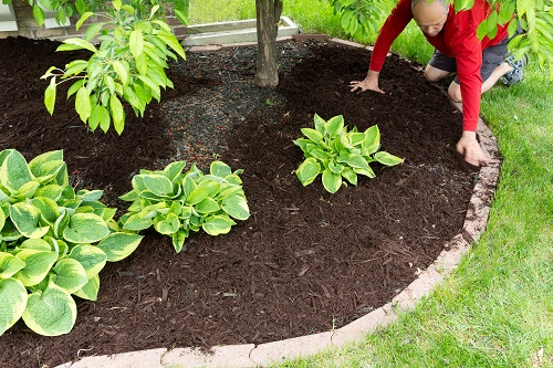 The Proper Way To Add Mulch Around Trees