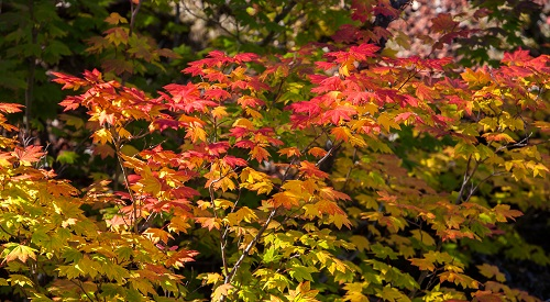 5 Steps to Take This Fall to Care for Your Trees