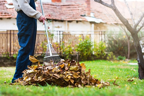 Man Raking Leaves in Yard - Best Request Oregon Tree Removal Blog