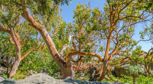 why-is-it-recommended-to-plant-drought-tolerant-trees