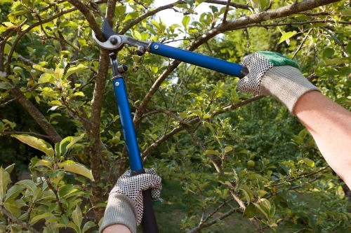 5 Tips for Spring Pruning