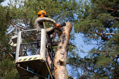 vernon-imel-5-questions-to-ask-when-hiring-tree-service