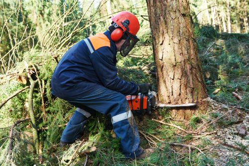 mr-tree-what-are-the-steps-of-diy-tree-removal