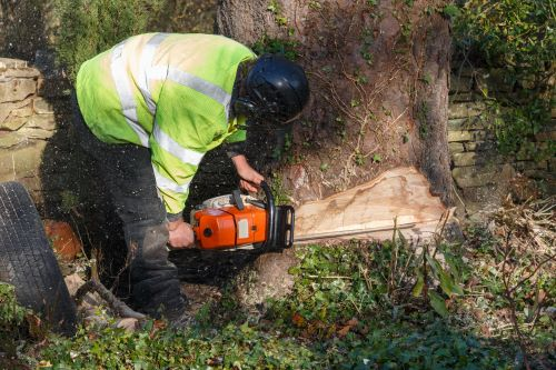 How-To-Cut-Down-a-Tree-Safely