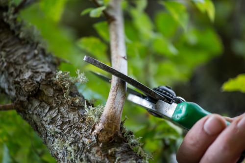 vernon-imel-5-tips-to-keep-your-trees-healthy-this-summer