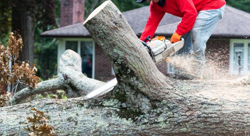 vernon-imel-5-tree-services-available-in-lincoln-city